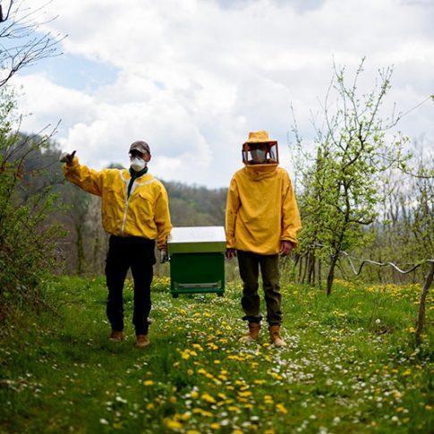 posizionamento api